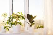 Decorative flowers in flowerpot on windowsill — Stock Photo