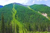 Dağ orman — Stok fotoğraf