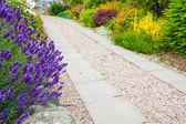 A gravel pathway between formal beds of lavender leading to an old sundial and trimmed hedges beyond. Horizontal format. — Stock Photo