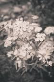 Piękne letnie kwiaty — Zdjęcie stockowe