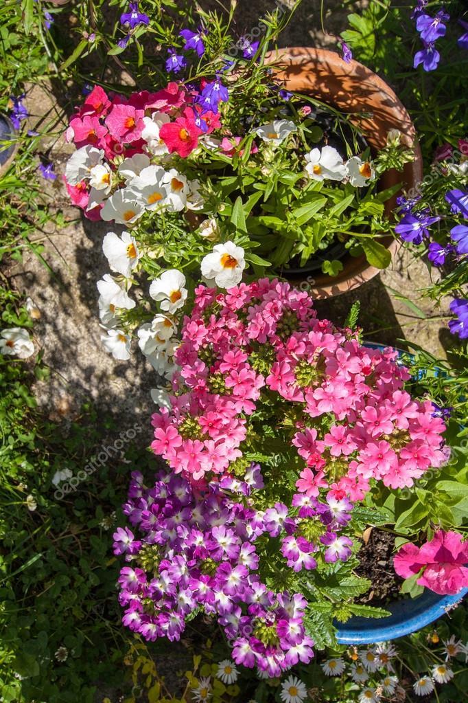 fotos de um jardim floridoCasa jardim florido — Fotografias de