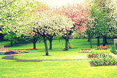 Cherry and apple Blooming trees in the park — Stock Photo