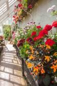 Interno della serra con una varietà di fiori — Foto Stock