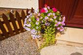 Purple petunia in flowerpot on wooden table on nature background — Stock Photo