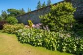 美丽的园景的夏天花园 — 图库照片