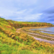 Cove bay with cliffs on the east coast of Scotland — Stock Photo #62262081