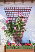 Beautiful flower decoration outside a scottish house — Stock Photo