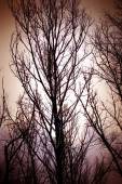 Dark gloomy trees — Stock Photo