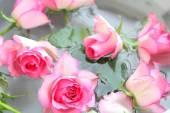 Růžové růže hezké pozadí — Stock fotografie