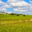 Sunny landscape with fields and blue sky in Scotland — Stock Photo #69318301
