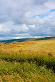 Sunny landscape with fields and blue sky in Scotland — Stock Photo