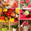 Set of different varieties beautiful flowers roses — Stock fotografie #56157095