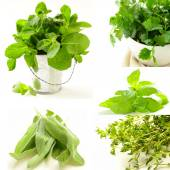 Collage of different kinds of herbs (thyme, mint, basil, sage) — Stock Photo
