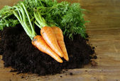 Ripe organic carrots with green leaves on the ground — Stock Photo