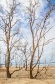 Dead tree branch on blue sky. — Fotografia Stock