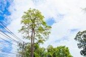 Branch of tree on blue sky — Stock Photo