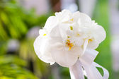 Wedding bouquet made from white orchid — Stockfoto