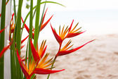 Floral arrangement at a wedding ceremony on the beach — Stock Photo