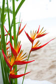 Floral arrangement at a wedding ceremony on the beach — Stockfoto