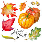 Vector autumn pumpkins,leaves and acorns — Stock Vector
