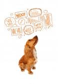 милая собака с лаем пузыри — Стоковое фото