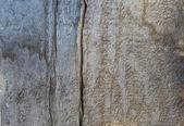 Grunge wooden board — Stockfoto