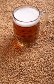 Mug of beer on malt — Stock Photo