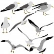 Set black silhouettes of seagulls on white background. Vector il — Stock Vector #52941789