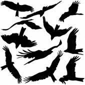 Set black silhouettes of prey eagles on white background. — Stock Vector