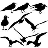 Set black silhouettes of seagulls on white background. Vector il — Stock Vector