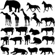 Set  silhouettes animals in zoo collection on a white background — Stock Vector #64112205