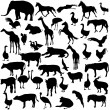 Set  silhouettes  animals and birds in the zoo collection. Vecto — Stock Vector #68535415