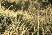 Blur  from a grass shiny in sunlight — Stok fotoğraf
