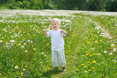 Child the boy plays on a green meadow with dandelions — Stock Photo