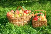 Crop of red juicy apples in baskets,thanksgiving holiday — Stock Photo