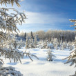 Winter landscape with the forest  and blue sky — Stock Photo #54758305