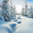 Winter landscape with the forest  and blue sky — Stock Photo #54758315