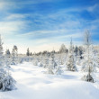 Winter landscape with the forest  and blue sky — Stock Photo #54758353