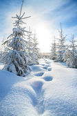 Winter landscape with the forest  and blue sky — Stockfoto