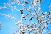 Tree  in the winter covered with snow on background the blue sky — Stockfoto