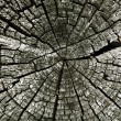 Wood cross section of tree trunk year rings , on cracked wooden — Stock Photo #54949455