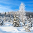 Winter landscape with the forest  and blue sky — Stock Photo #57819957