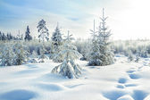Rural winterlandschap met het forest — Stockfoto
