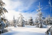 Winter landscape with the forest  and blue sky — Stock Photo