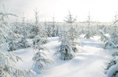 Winter landscape with the forest — Foto de Stock