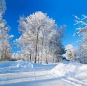 Invierno paisaje rural con la carretera de la selva y la aldea — Foto de Stock