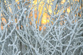 Sun shines through branches of the trees covered with snow — Stock Photo