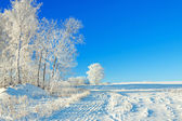 Rural winter landscape a with the blue sky, a field and the fore — Stock Photo