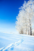 Winter landscape a with the blue sky, a  footpath  and the fores — Stock Photo