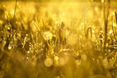 Yellow blur background from a grass on a field — Stock Photo